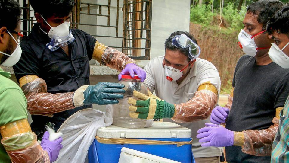 fruit bats identified as source of nipah virus outbreak in kerala