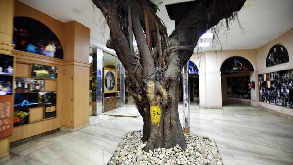 Then there's the iconic Banyan tree in the NSD campus in Delhi, and another that has its trunk and roots located under the main floor. The environment built around it shows the love for its presence inside the campus. (Raj K Raj / HT Photo)