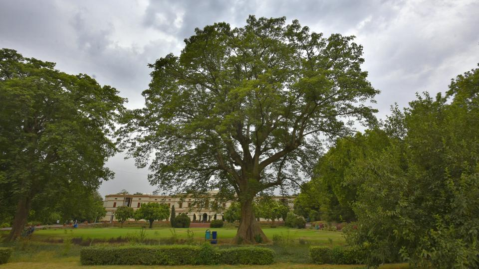 The sprawling and Semal tree on the front lawn of Teen Murti Bhavan, former residence of Pandit Jawaharlal Nehru finds favour with everyone who visits the museum and library even today. When in full bloom, bright red flowers occupy it, making it, arguably, Delhi's most beautiful springtime offering. (Raj K Raj / HT Photo)