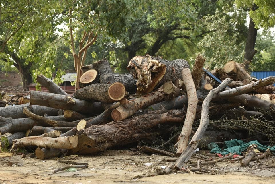 Delhi high court,Delhi trees cut,Delhi redevelopment projects