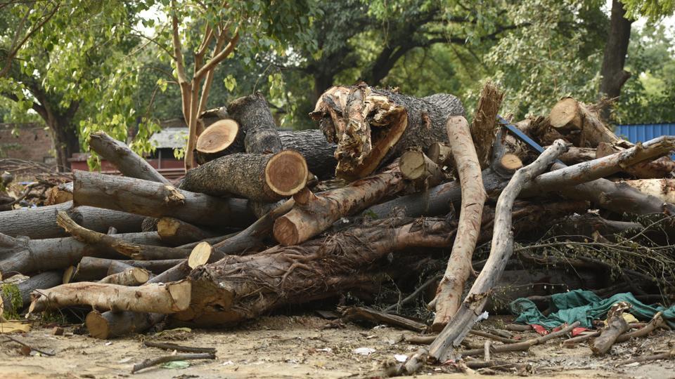 Akbar Road,Gujarat Sadan,Delhi trees
