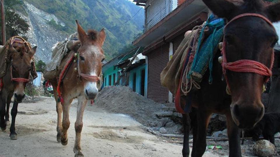Legal entity,Uttarakhand news,Animal rights