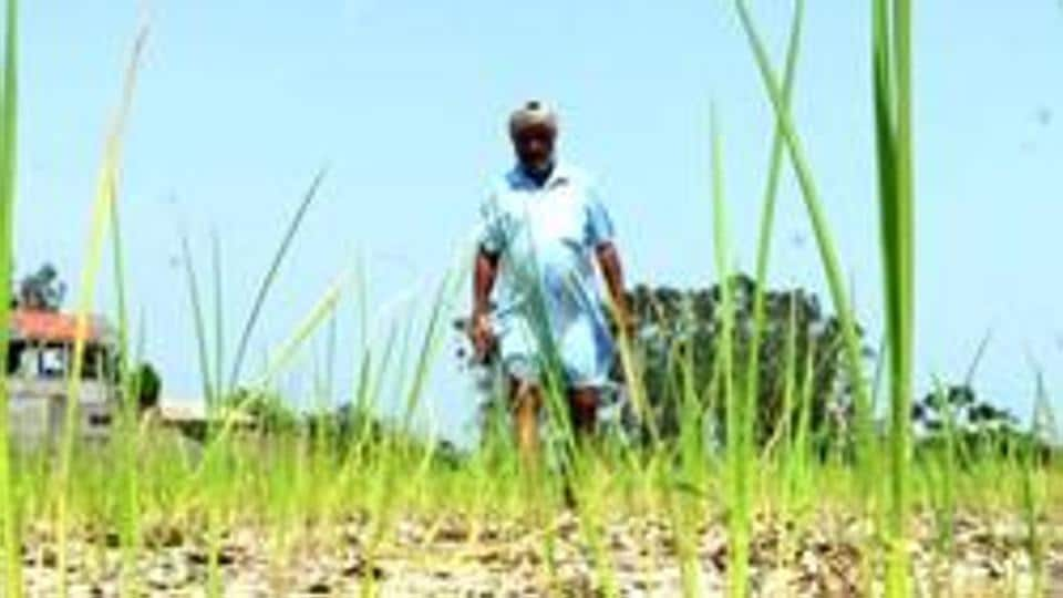 "Goa agriculture minister Vijai Sardesai said the BJP-led state government would promote ""cosmic farming"" with a view to increase crop yield."