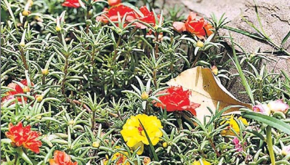 delhiwale,Lodhi Gardens