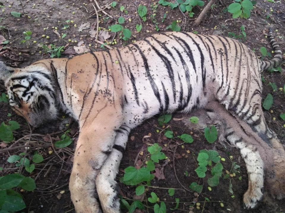 A two-year-old tigress was found dead in Radrapur forest area on Thursday evening.