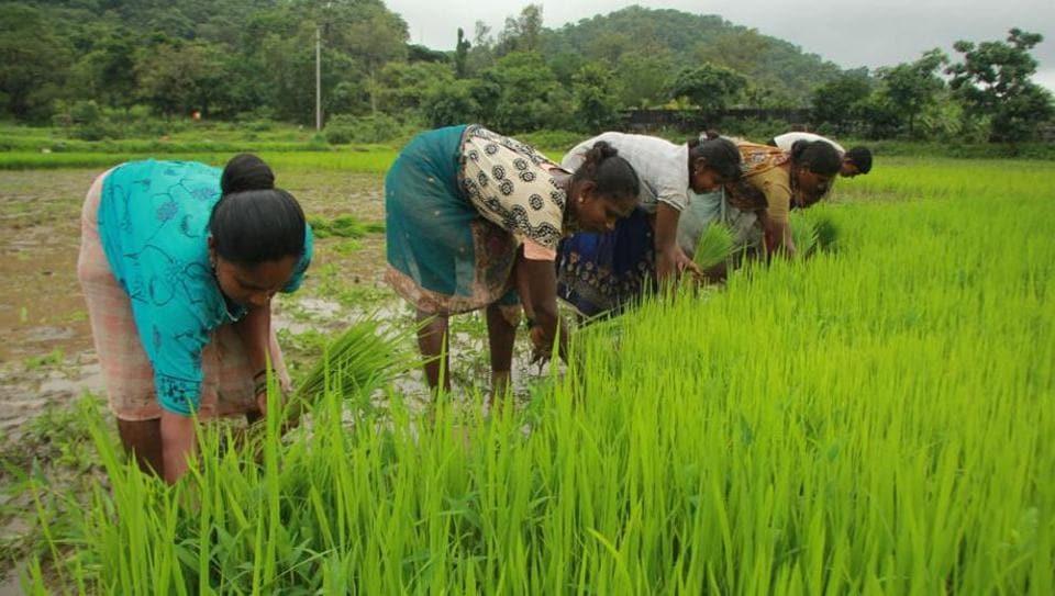 Maharashtra farmers,Maharashtra government,minimum support price