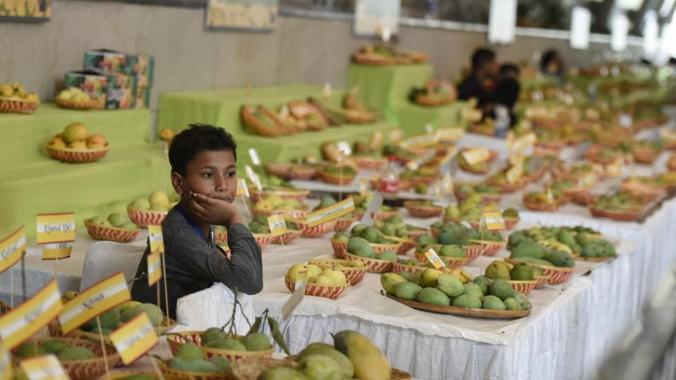 At  the 30th Mango Festival 2018, in Delhi, the participating mango-growers across India displayed newer varieties of the fruit besides the usual hits such as Langra, Chausa, Rataul, Hussainara, Ramkela, Kesar, Fazri, Mallika, and Amrapalihat. Being organised in the Capital since 1988, this year's edition had over 500 varieties of mangoes displayed by participants from Bihar, Haryana, Punjab, Himachal Pradesh, Uttrakhand and Uttar Pradesh. (Burhaan Kinu / HT Photo)