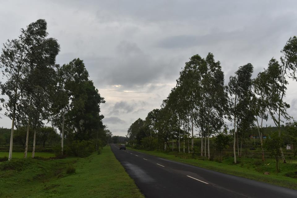 Eucalyptus trees planted on both sides of a highway connecting Dindori and Amarkantak in Madhya Pradesh
