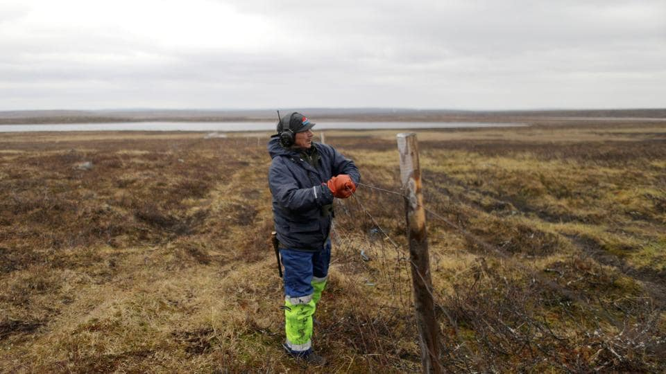 Nils Mathis Sara repairs a fence in the Finnmark Plateau, Norway. When he's not out on the Arctic tundra with his 2,000 reindeer and his dog, Sara is busy explaining to people how a planned copper mine threatens his livelihood. Along with other herders and fishermen, the 60-year-old is in a standoff with the mine owners, Norwegian officials and many towns people that is, after six years, coming to a head. (Stoyan Nenov / REUTERS)