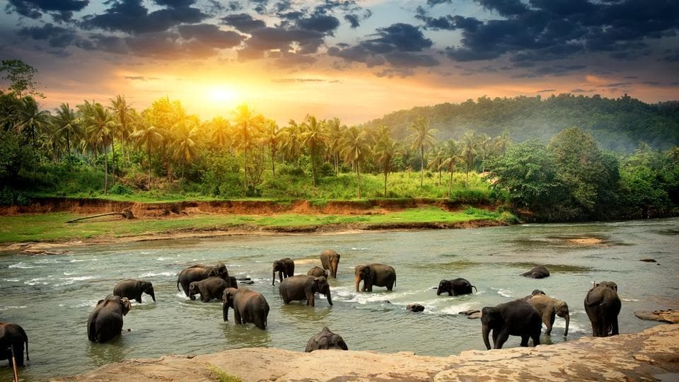 Sri Lanka,Tourism,Tourist