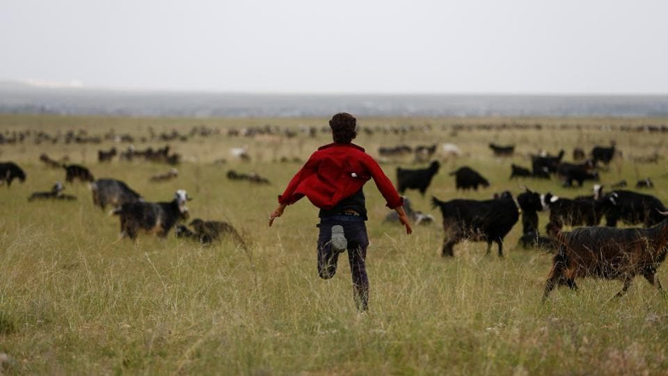 Muhammet Gobut runs to control a herd of goats. The family is part of the nomadic Yoruk tribe which for more than a millennium has crisscrossed Anatolia, a region that includes much of Turkey. Half a century ago, 1,000 families roamed the Anatolian steppe but now there are just 86, mirroring a decline in nomadic tribes worldwide due to industrialization and agricultural development. (Osman Orsal / REUTERS)