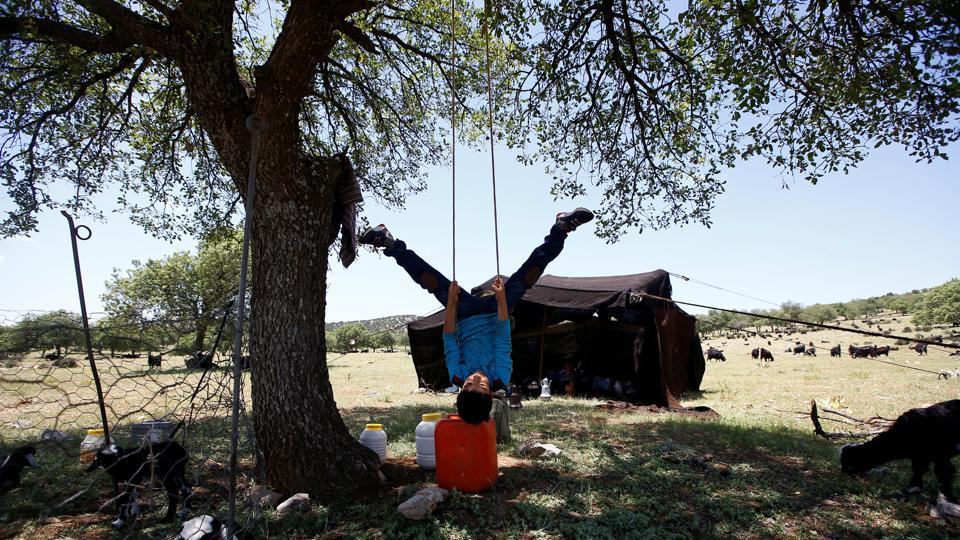 Yunus Gobut swings from a tree in front of the tent. The Gobuts have mobile phones but for news they listen to the radio for 15 minutes each evening. Yunus, is given leave to miss primary school after April to go on the trek. (Osman Orsal / REUTERS)
