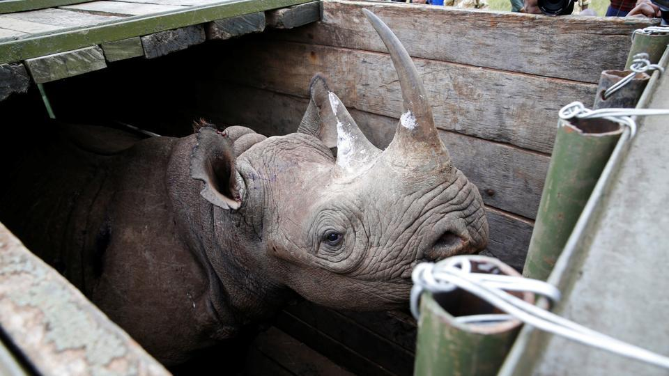 black rhino,rhino deaths,Kenya