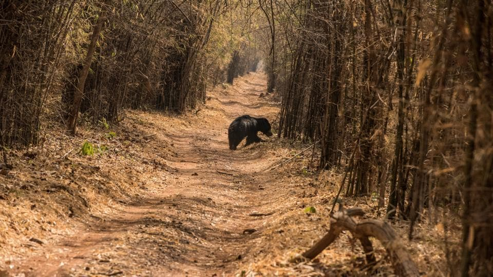 Sloth bears,Indian Army,Soldier