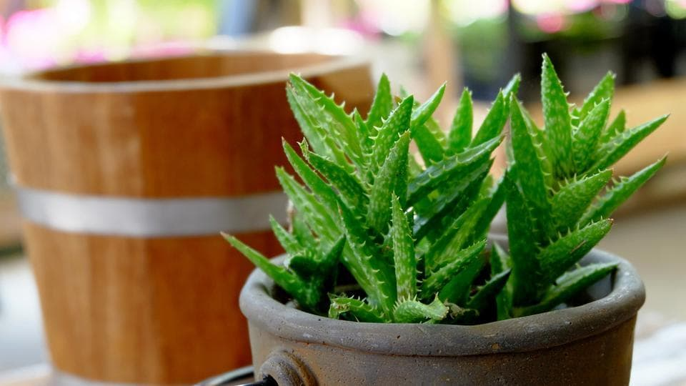 Healing plants,Plants with healing powers,Medicinal plants