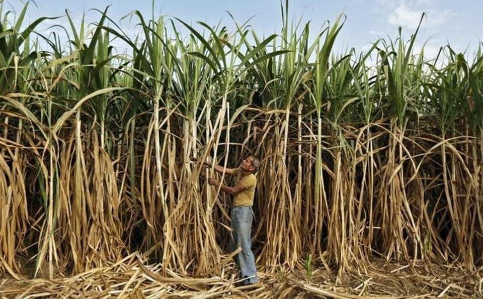 Sugarcane,Farmers,Dues