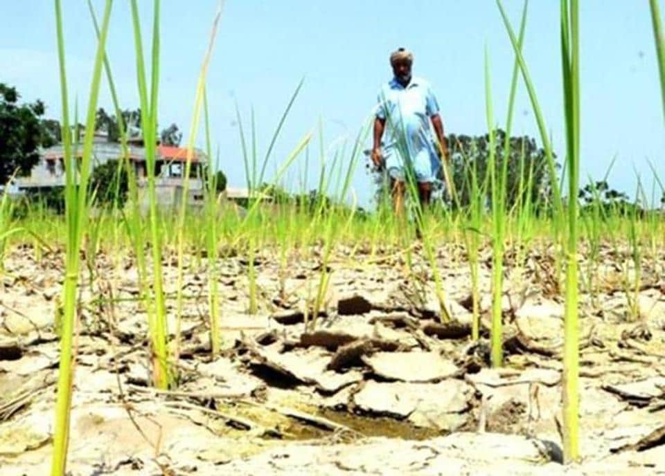 Drought like situation,Uttar Pradesh,Paddy sowing