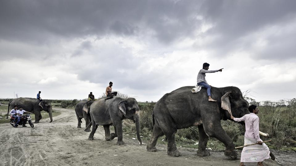 Delhi,Delhi elephants,Jagatpur area of Delhi