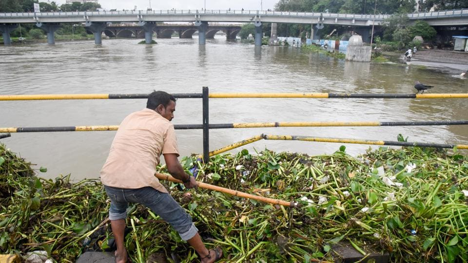 With rivers in full flow, this PMC worker took the chance to rid the water bodies of hyacinth at Bhide bridge, given the levels of the Mutha river had risen substantially due to water being discharged from the Khadakwasla dam.  (Sanket Wankhade/HT PHOTO)
