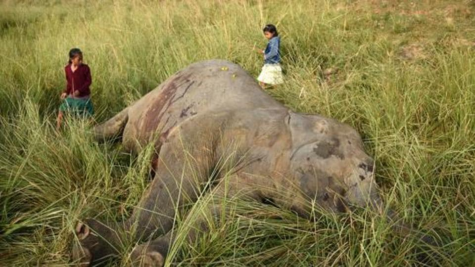 Forest officials say it was not clear at present why the elephant died.
