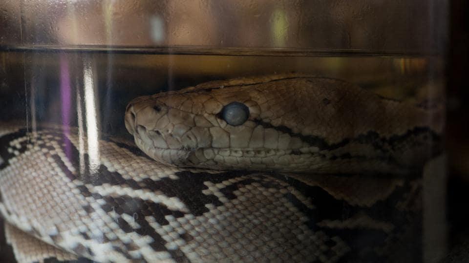 snake bite,China,order snake online