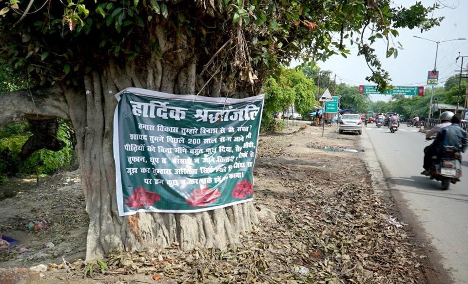 Lucknow,Greenery,Tree