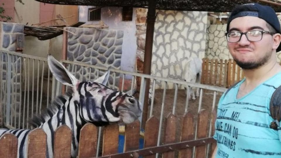 Mahmoud Sarhan spotted the two strange-looking zebras with long pointy ears at the International Garden municipal park.