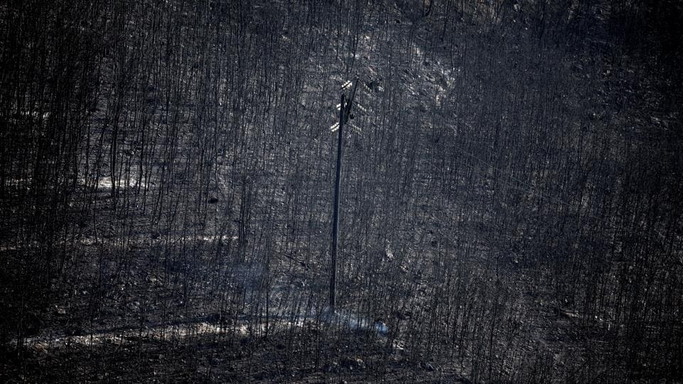 An electricity pole stands among burnt trees following a wildfire in Neos Voutzas, near Athens, Greece on July 25, 2018. (Alkis Konstantinidis / REUTERS)