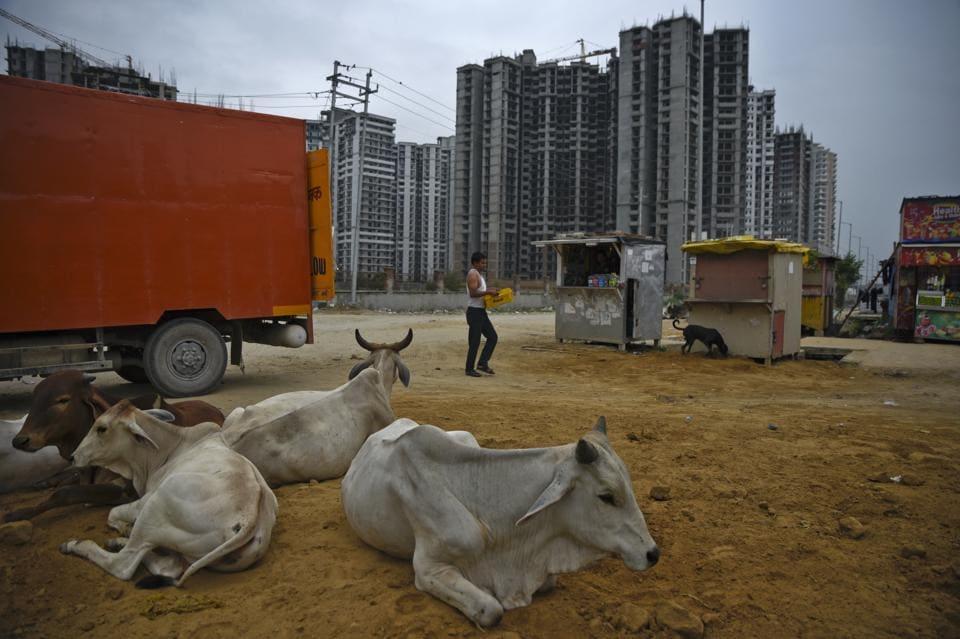 Assam lynching,Cow thieves,Cow vigilantes
