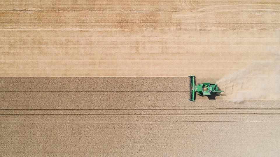 A farmer harvests a wheat field with a combine harvester near Hildesheim, northern Germany on July 23, 2018. (Julian Stratenschulte / AFP)