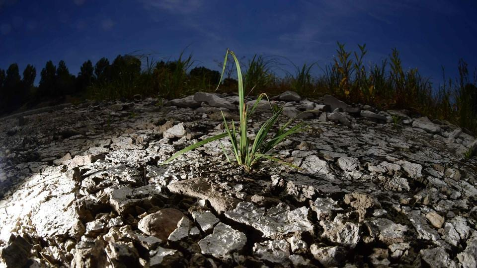 A plant is pictured at the dried out riverbank of Elbe in Magdeburg, eastern Germany on July 26, 2018. Dozens of wildfires have hit countries across northern Europe and Greece as a heatwave continues to hold across much of the continent. (Tobias Schwarz / AFP)