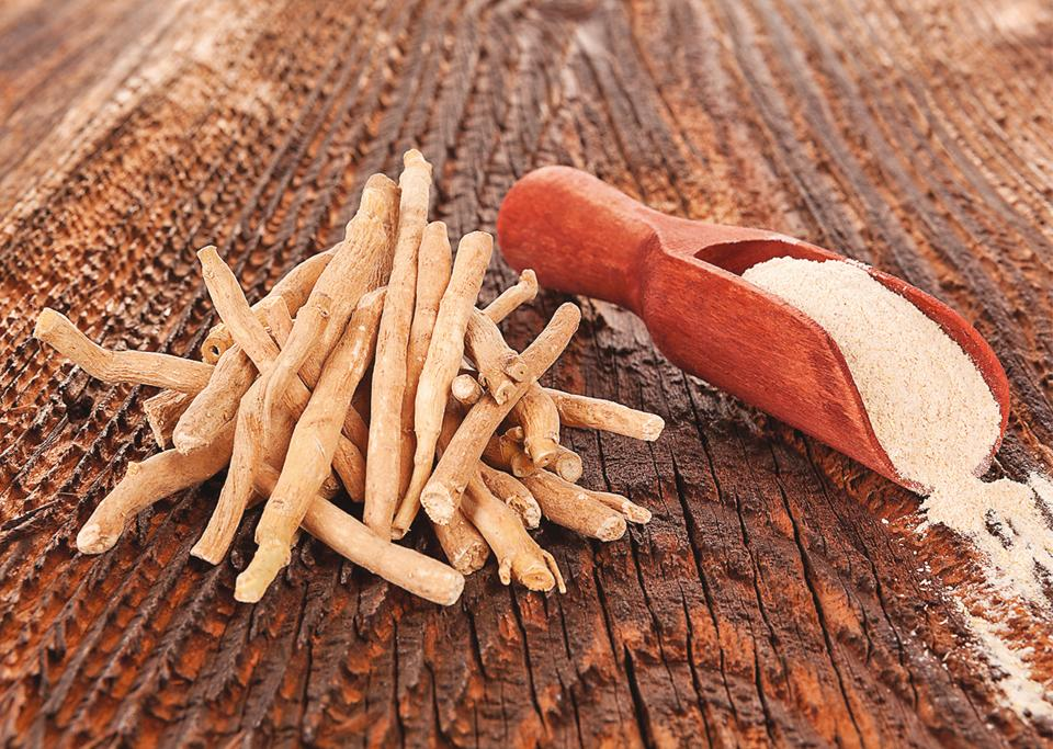 Shrub-like ashwagandha can cope with everything from cancer to hair loss
