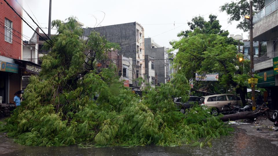 A tree was uprooted due to heavy rains at Geeta Colony in New Delhi. The Irrigation and Flood Control department of the city government has made preparations to evacuate people residing in low-lying areas. (Sonu Mehta / HT Photo)