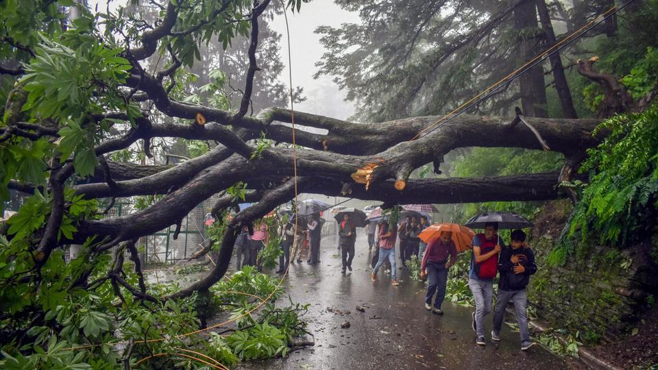 An uprooted tree falls in a road following monsoon rainfall, in Shimla on Saturday, July 28, 2018.