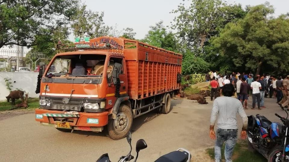 The canter truck that was stopped by a mob of 'vigilantes' in Greater Noida's Kasna area on July 29, 2018. The mob roughed up the driver of the truck which was carrying 100 buffalo calves.