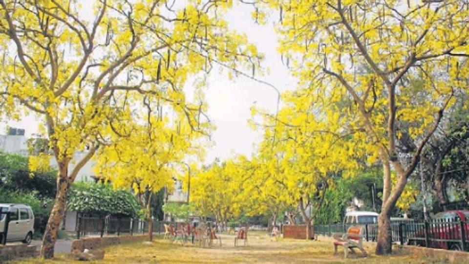 delhiwale,BK Dutt Colony,Batukeshwar Dutt