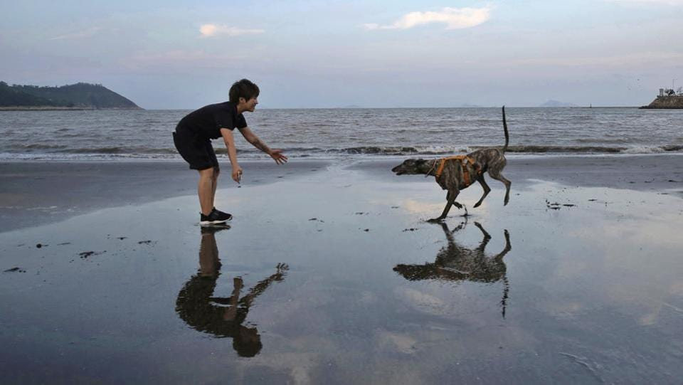"""Edith Lam plays with her five-year-old adopted greyhound Garlic from Macau (Yat Yuen) Canidrome. """"He walks slow and he loves to take me to the seaside for walks every night,"""" Lam said. """"I suffered from depression before. I'm not sure whether he saved my life or I saved his,"""" he added. Garlic is among 533 greyhounds abandoned by the club due to its closure. (Kin Cheung / AP)"""