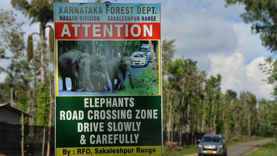 The elephants too are paying a heavy price with around 700 fatalities in the last eight years. Most were killed by electric fences, poisoned or shot by locals angry at family members killed or crops destroyed, and accidents on railway cutting through ancient migratory routes. And Karnataka, home to India's largest elephant population with more than 6,000 - 20% of the total-  is on the frontline. (Manjunath Kiran / AFP)