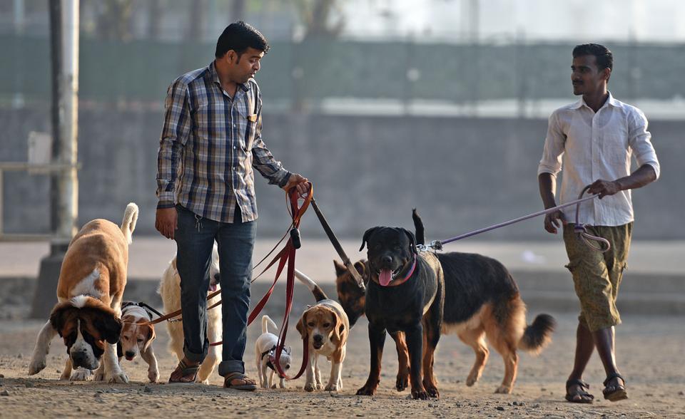 pune,maharashtra,pet owners
