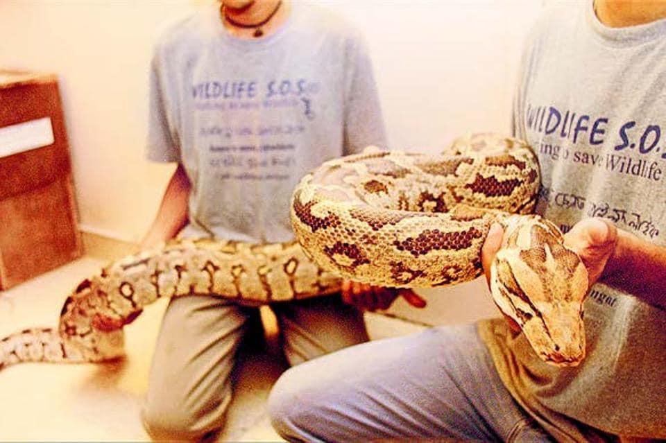 Delhi,Wildlife SOS,snakes in delhi