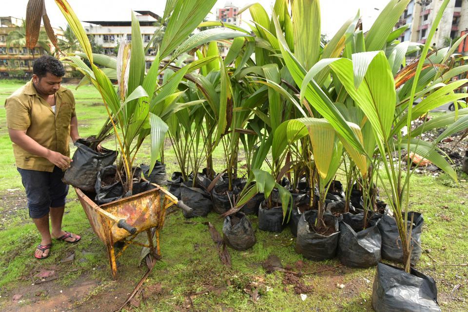 Navi Mumbai,saplings,Nerul