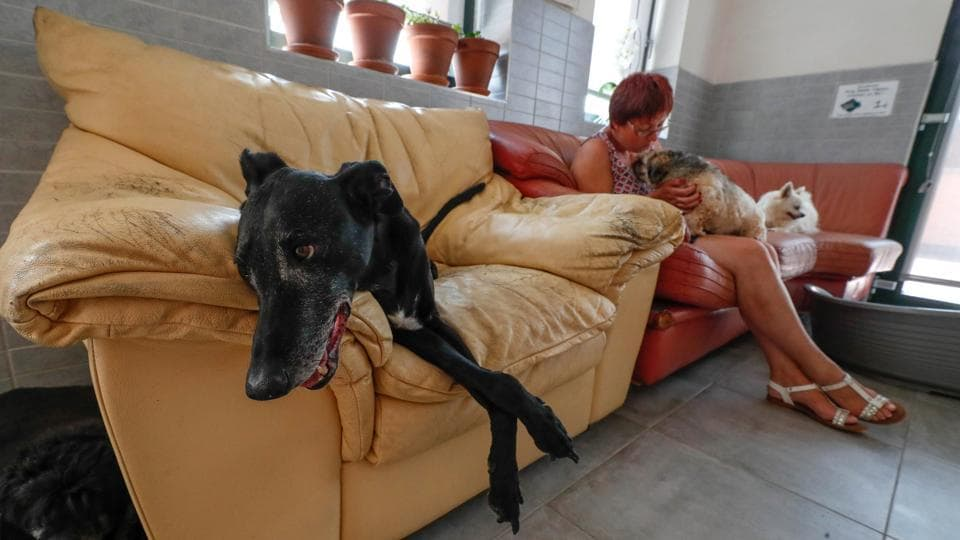 "Victor, a 15-year-old Galgo Hound, sits on a sofa next to Belgian Valerie Luycx, a founder of the association ""Les Petits Vieux"" acting as home for dozens of elderly animals, including dogs, cats, pigs and goats in Chievres, Belgium. (Yves Herman / REUTERS)"