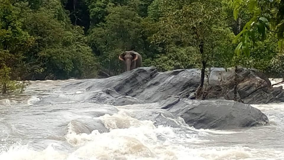 The stranded elephant was first noticed by locals and they immediately informed the forest department officials.