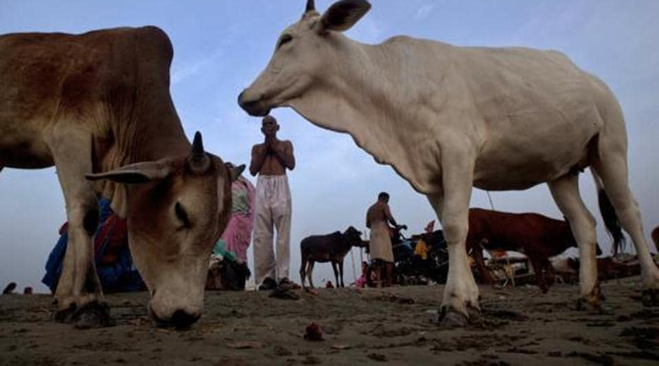 Pune,constable,beef traffickers