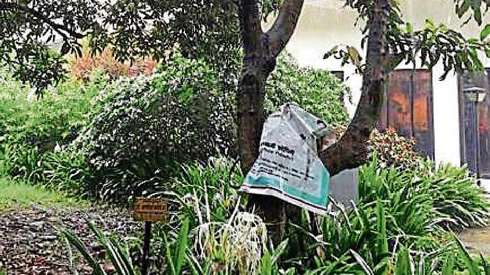 Vajpayee,Mango tree,Uttan