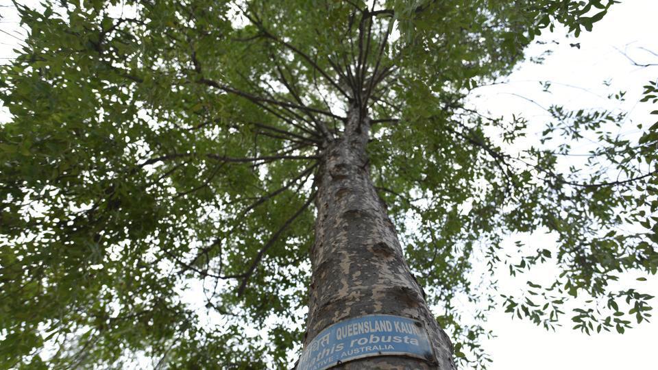 NDMC raising '2nd generation' of plants to replace heritage trees
