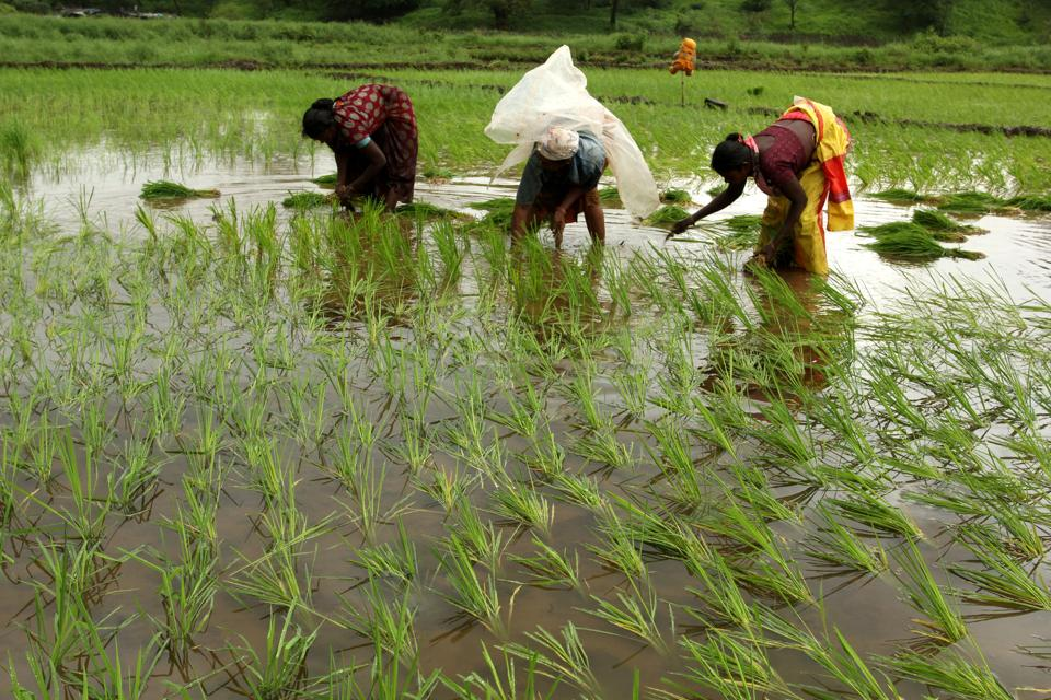 Agriculture in India is significantly dependent on women. Women make up about 33% of cultivators and about 47% of agricultural labourers in rural India.