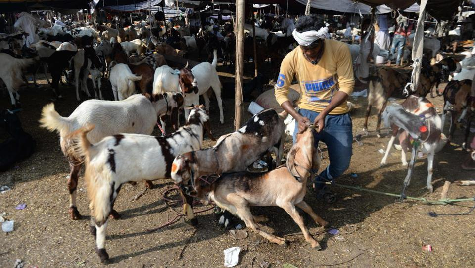 A man seen feeding his goat at a livestock market ahead of the Eid al-Adha festival in the old quarters of New Delhi. Muslims across the world have begun celebrating the annual festival which falls during the Hajj period and is also called the Festival of the Sacrifice, commemorating the story of Prophet Ibrahim's test of faith. (Arun Sankar / AFP)
