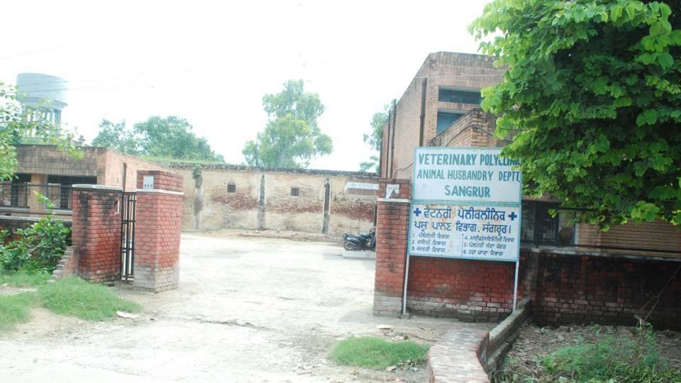 medical fee,veterinary hospitals,Punjab