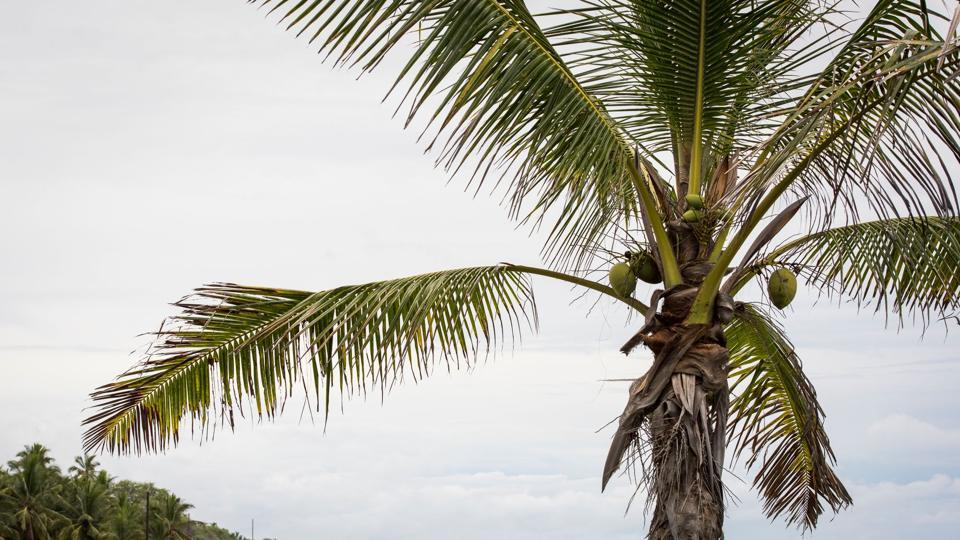 Hawaii,Hurricane Lane,Hawaii hurricane